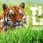 -bandhavgarh tour | MY INDIA DARSHAN
