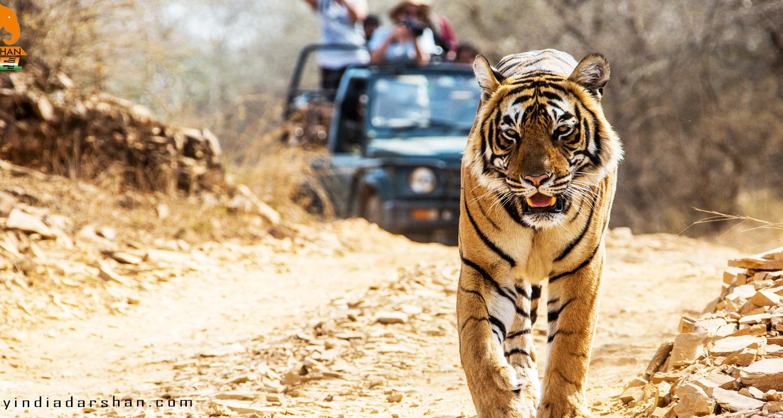 -bandhavgarh tour1 | MY INDIA DARSHAN