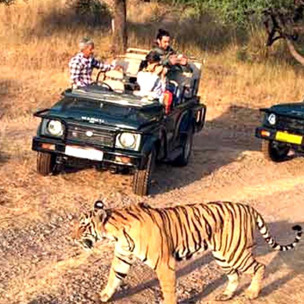 -Jim Corbet National Park Tour | MY INDIA DARSHAN